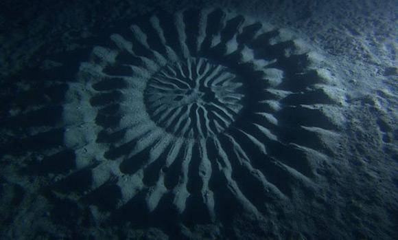 underwater_crop_circle_2